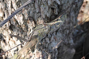 2012-04-05 Tree Versus Fence by charliemarlowe