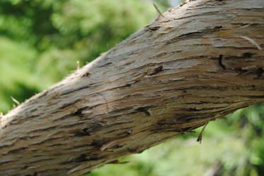 2012-05-10 Lilac Tree Bark I by charliemarlowe