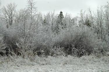 2013-04-10 Winter  Ice (1) by charliemarlowe
