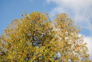 2013-10-07 Door County Autumn Leaves by charliemarlowe