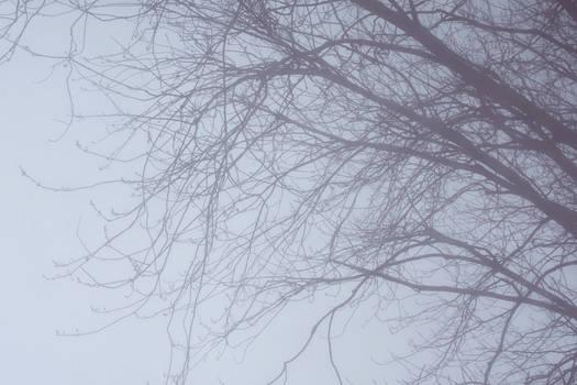 2019-02-20 Winter skies