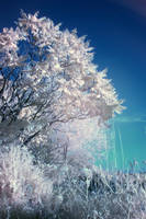 White Tree by Kik-un-riz