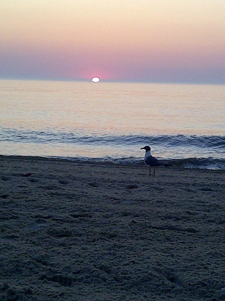 Sea Bird by martawolf