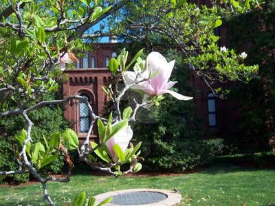 Magnolia Doubles by Nagasaki175