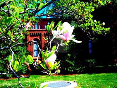 Magnolia Doubles 2 by Nagasaki175