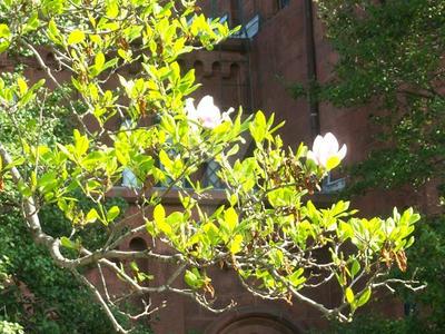 Magnolia Bright by Nagasaki175
