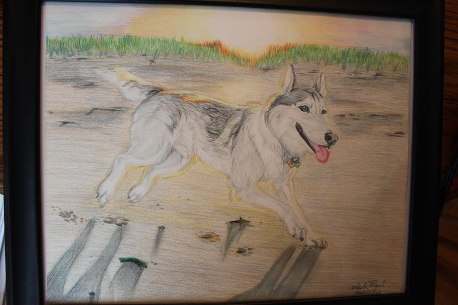 Wolf in Maine by Miahii
