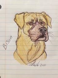 Bison notebook sketch
