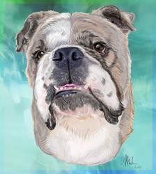 Bulldog Commission