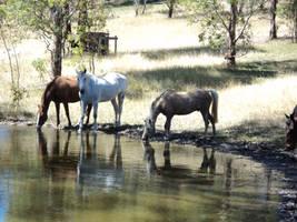 HorseStock016 by starrlightstarbright