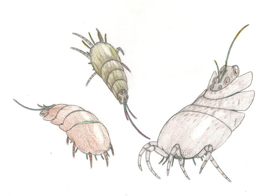 Radishrimp