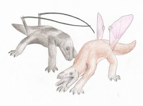 Pleona Squamoids
