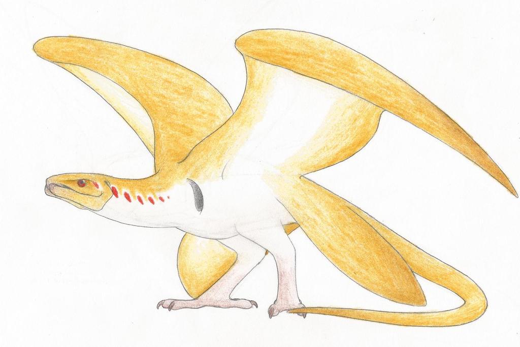 Dracos marahute