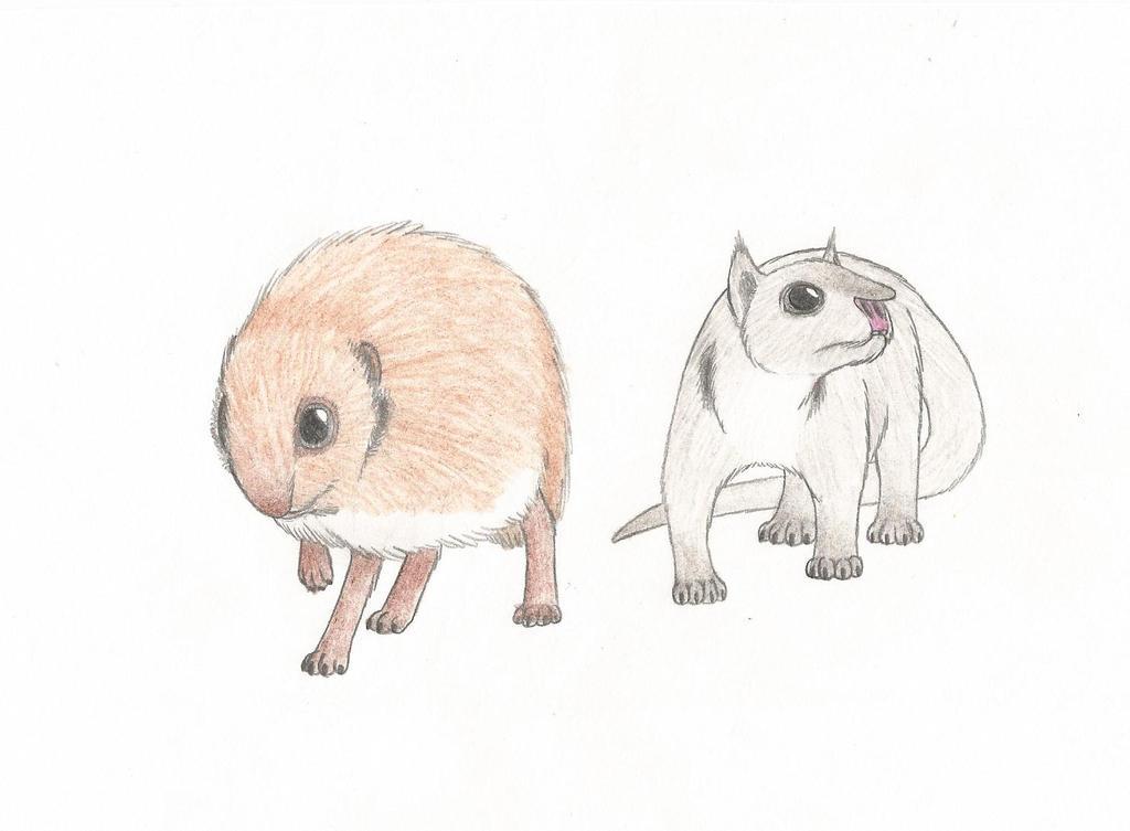 Small Cilliderms