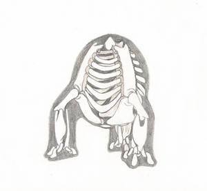 Basic Land Radial Skeleton