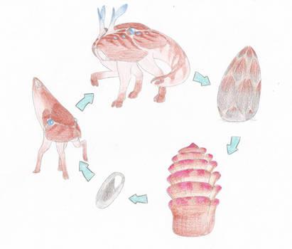 Deinodinae Life Cycle