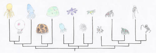 Minecraft Invertebrate Cladogram
