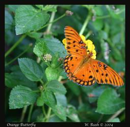Orange Butterfly by IrishRaine