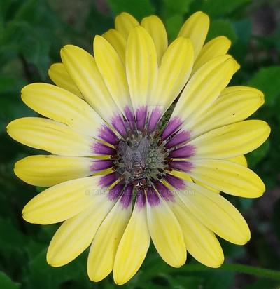 Flower with Fly by IrishRaine