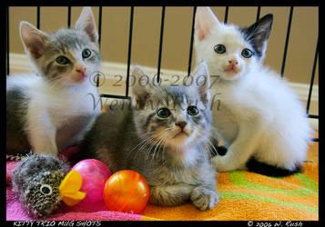 Kitty Trio Mugshot by IrishRaine