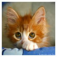 Big Trouble in a Little Kitten by IrishRaine
