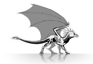 Dragon Anatomy - Skeleton