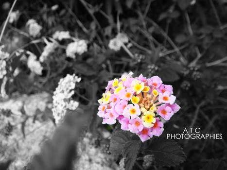 PHOTOGRAPHIES_1