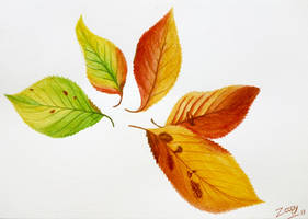 Autumn leaves (Cherry tree) by l-Zoopy-l