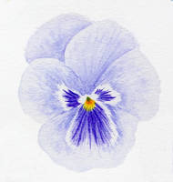 Pansy practice 05 by l-Zoopy-l