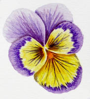 Pansy practice 08 by l-Zoopy-l
