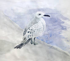 Gull Sketch by l-Zoopy-l