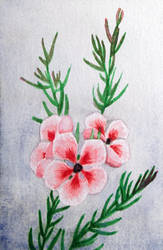Holiday Cards 2018 - Pink bush by l-Zoopy-l