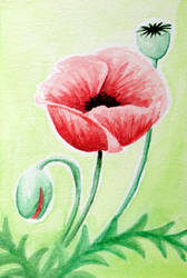 Holiday Cards 2018 - Poppies by l-Zoopy-l