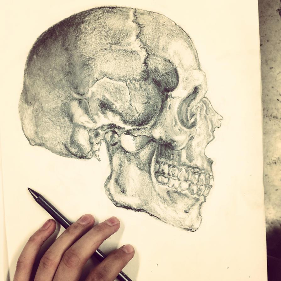 skelly bones by i832muffins