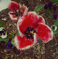 Bloomin' by FanFrye24