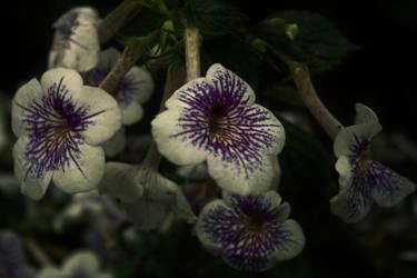 In the Garden by FanFrye24