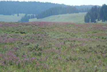 Field Stock - Wyoming Trip by Azaroe