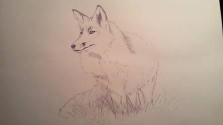 Fox by anythingLDA