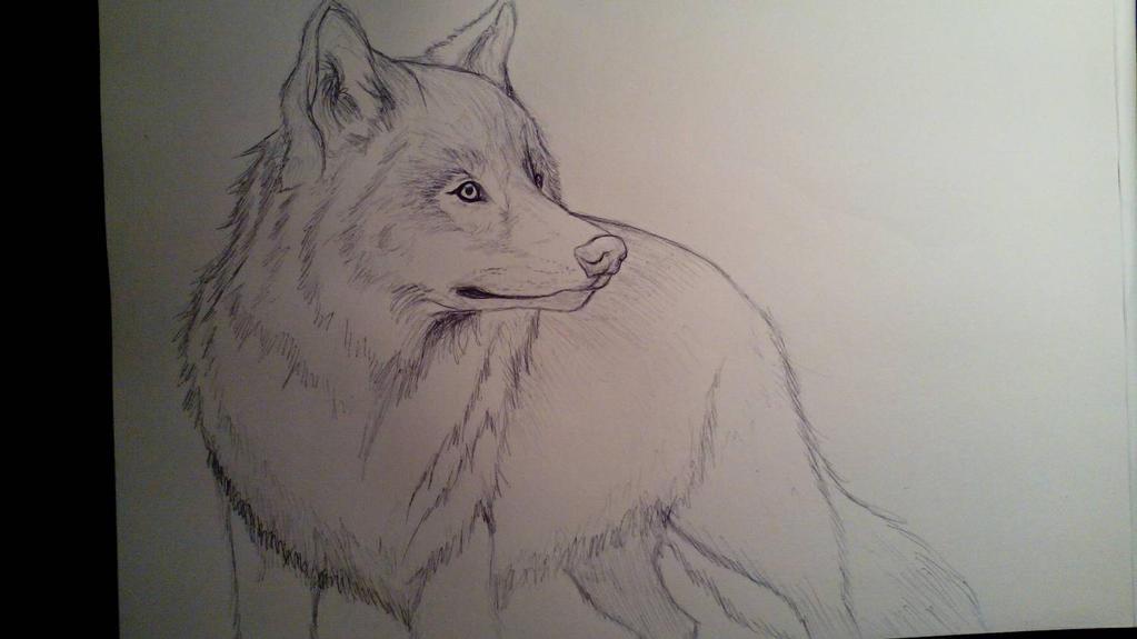 Wolf by anythingLDA