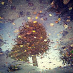 window to the autumn