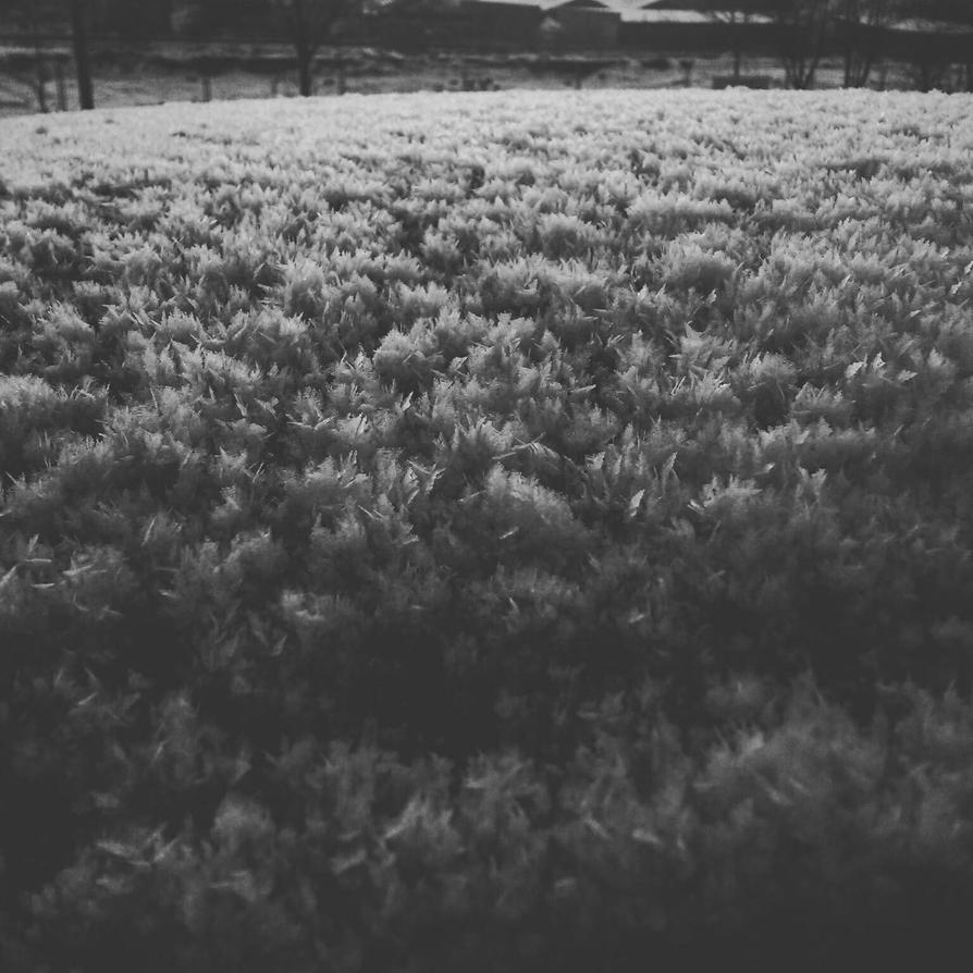 -14 by siby