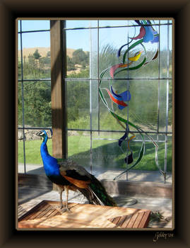 Peacock in Stain Glass Chapel