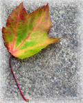 Colorful Leaf II '08 by Goldey