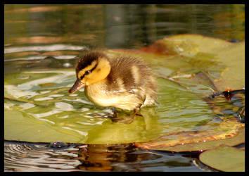 little duck II by slawomirj