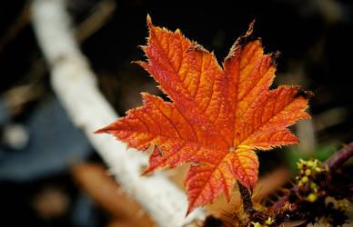 Fire Leaf