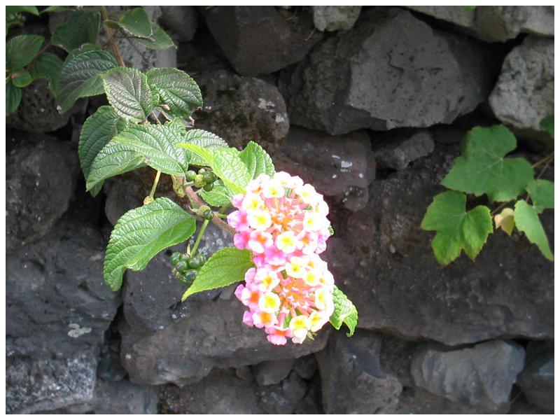 Just a Flower by Dredmix
