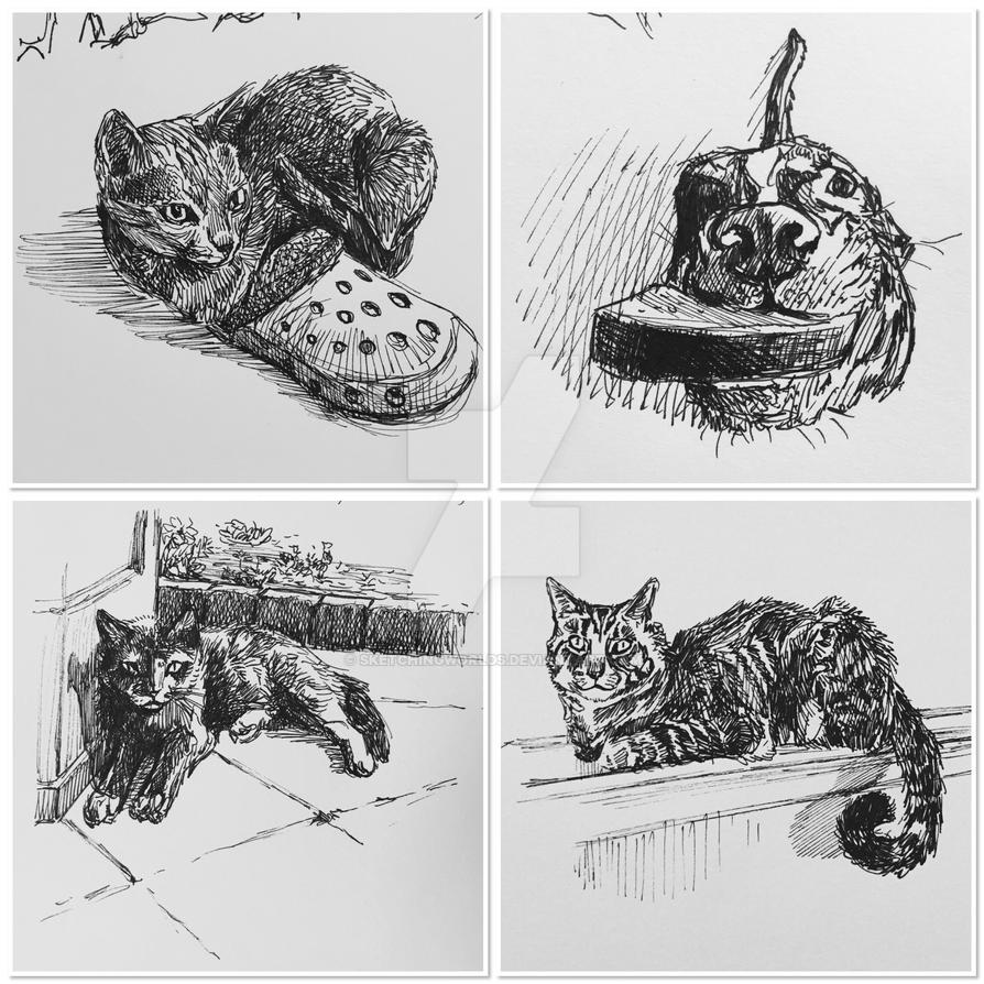 Pet sketches by SketchingWorlds