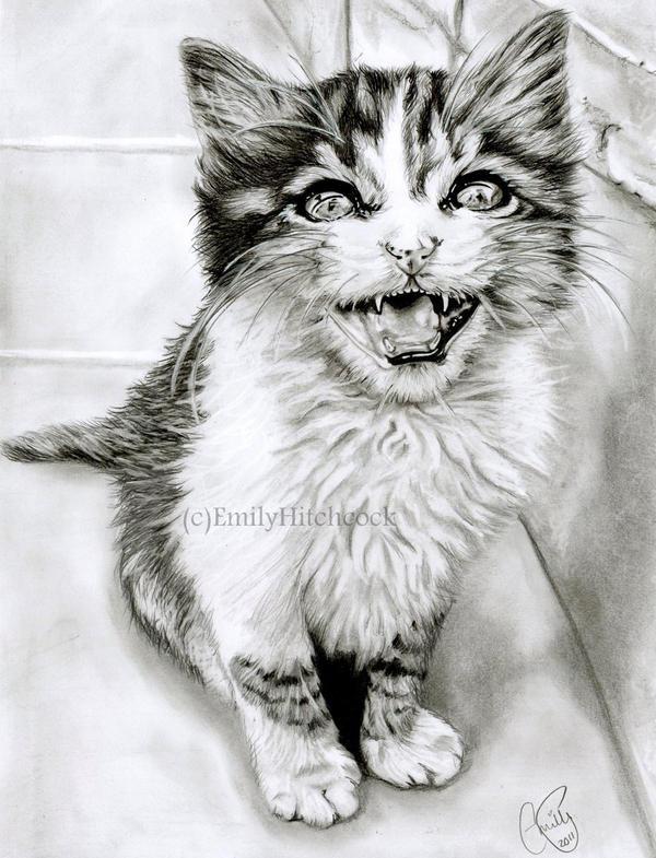 Kitten by EmilyHitchcock