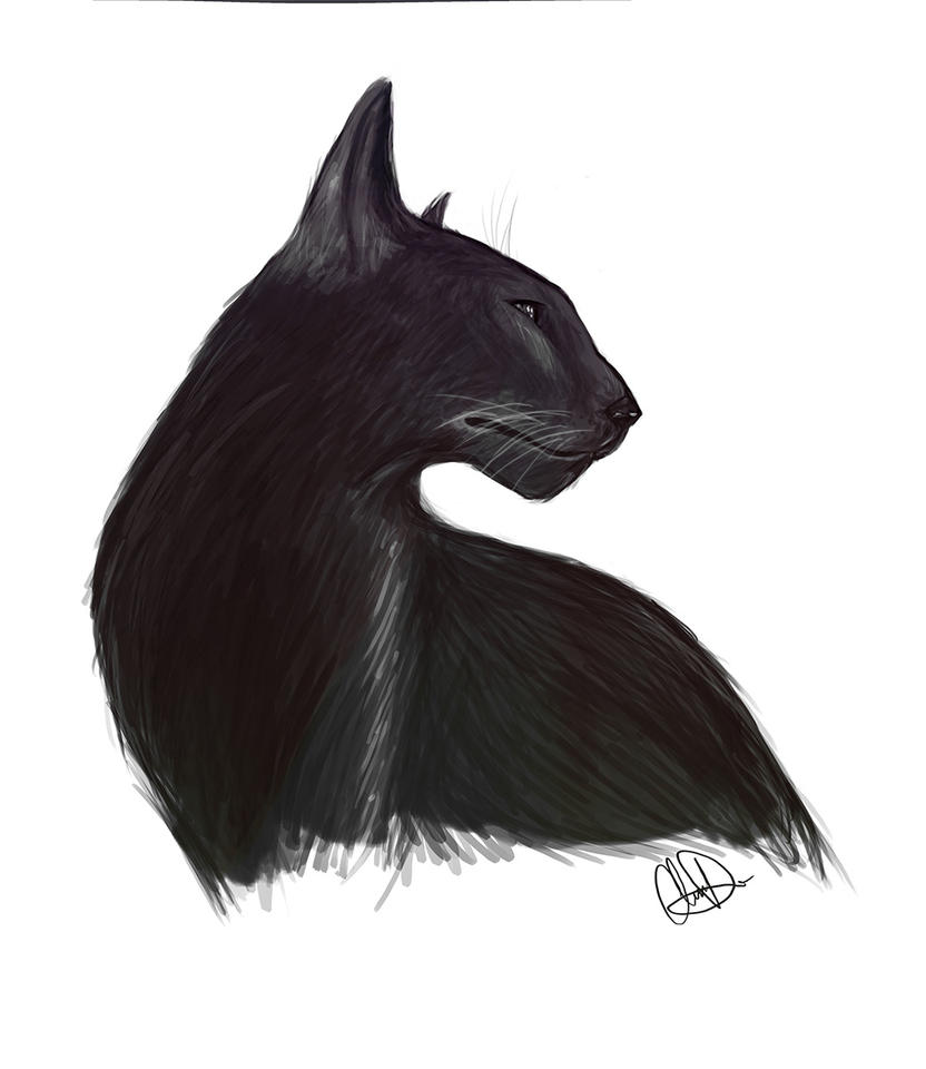 Cat by pandatails