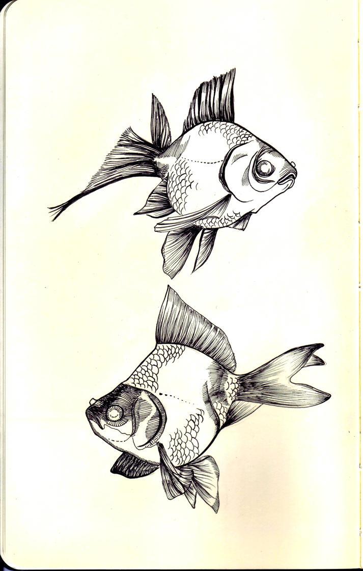 goldfish by aerienaut